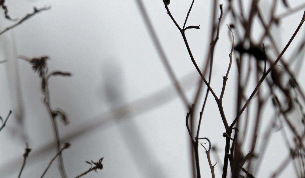 winter seeds.jpg
