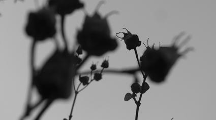 inspiration prairie garden black and white sally grant jewellery.jpg