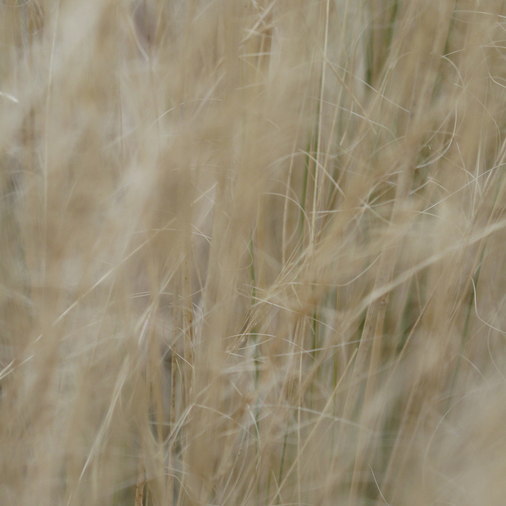 Grasses and reeds