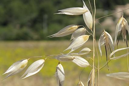 Majorca grasses.jpg