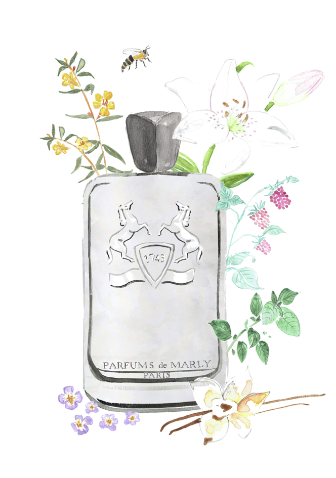 Perfume Illustration
