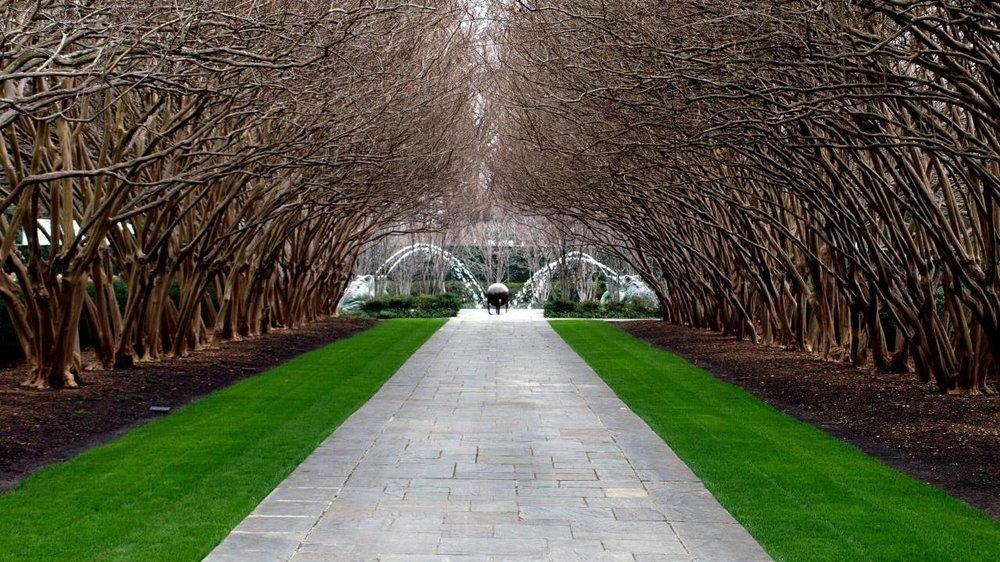 Image Credit: Dallas Arboretum