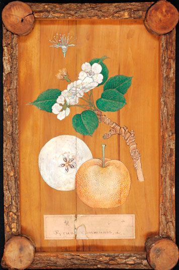 A 19th century Japanese wood panel depicting Asian pears