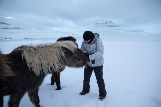 Icelandic horses are sweethearts and they love bread.  You can see all my bulky, warm, layered glory as these two snuggle up to me to be fed.