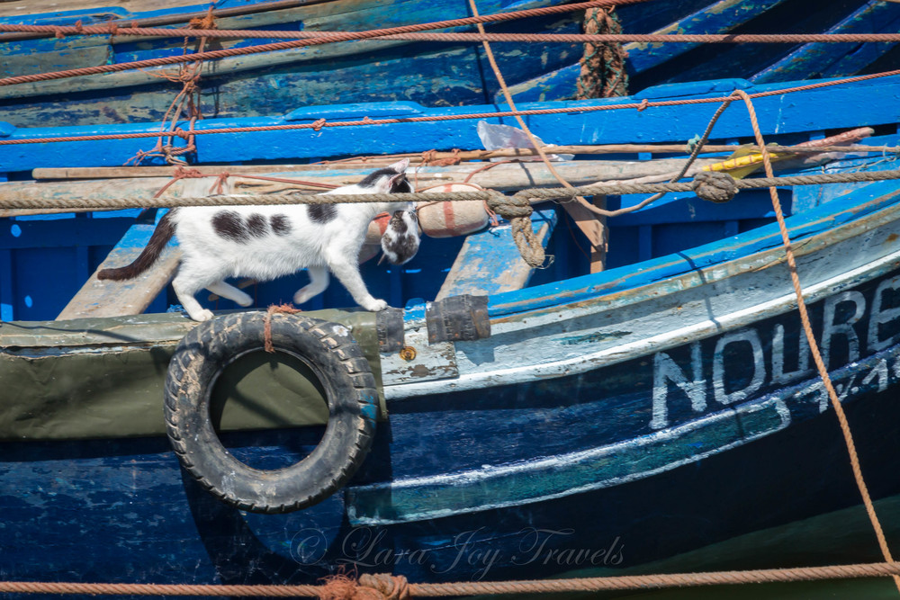 morrocan cats-18.jpg