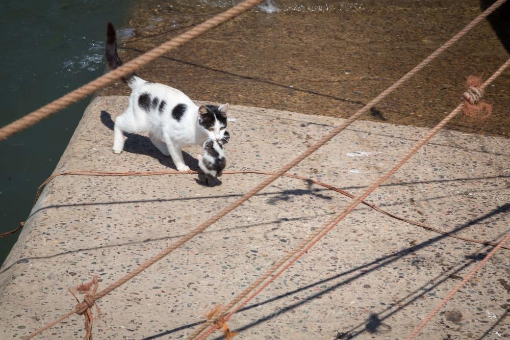 morrocan cats-21.jpg