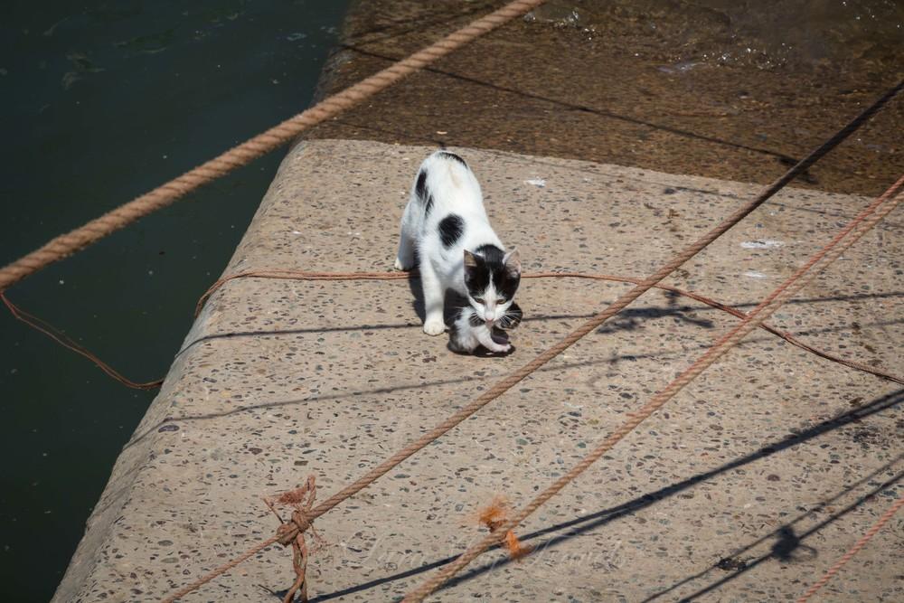 morrocan cats-22.jpg