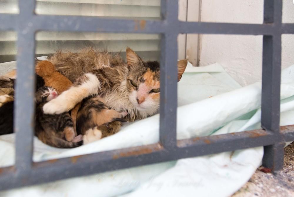 morrocan cats-12.jpg