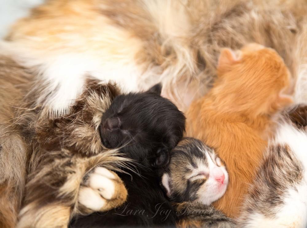 morrocan cats-14.jpg