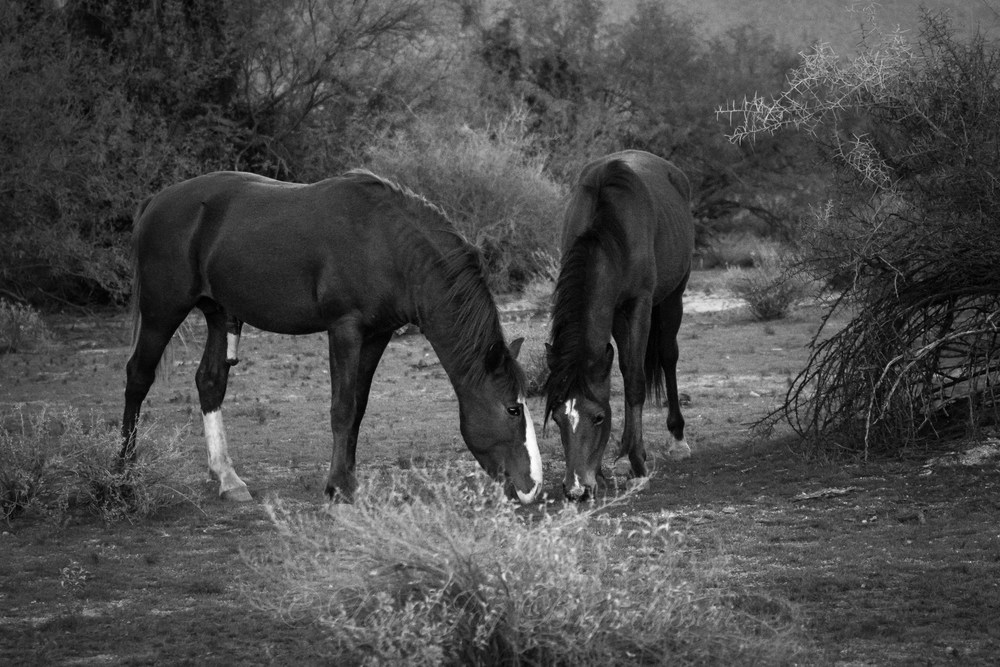 _W5A7129Watch for Horses II Mating Dance.jpg