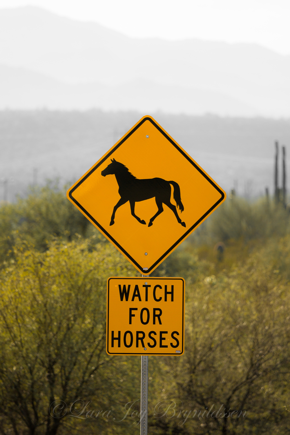 1F8B2529Watch for Horses I.jpg