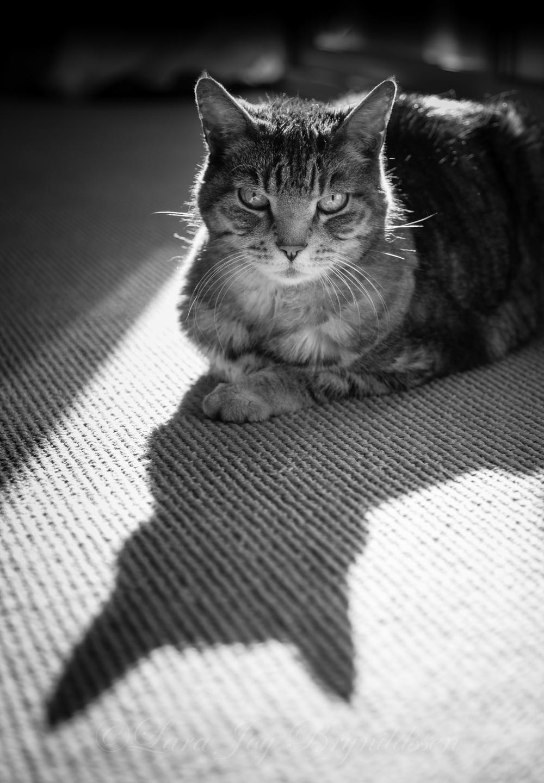 1F8B6625crazy cat people.jpg