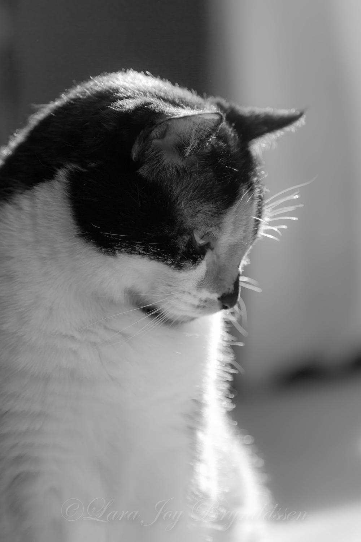 1F8B6660crazy cat people.jpg