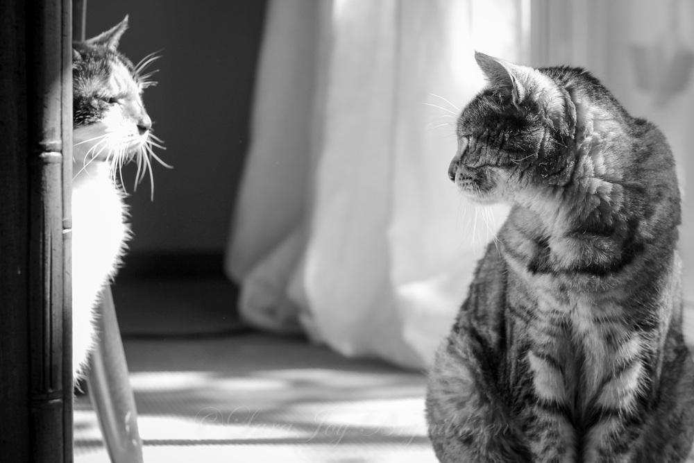 IMG_082320130524crazy cat people.jpg