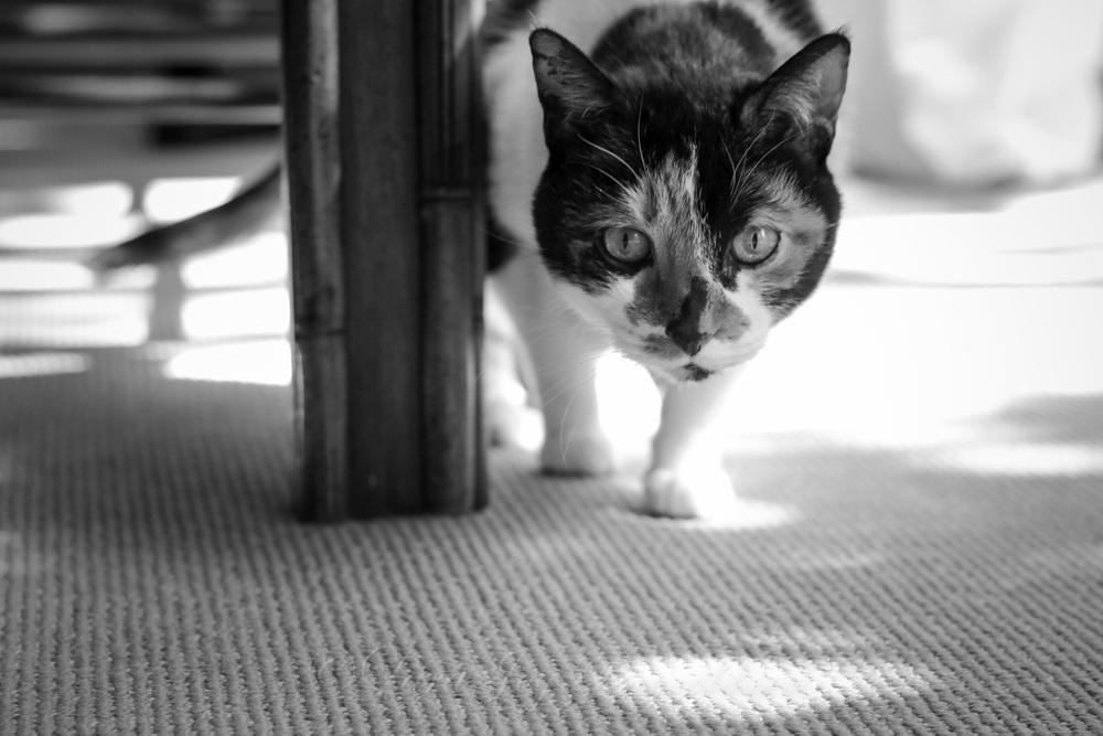 IMG_082920130524crazy cat people.jpg