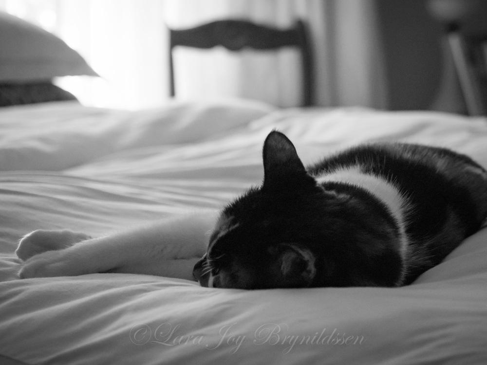 P8060057crazy cat people.jpg