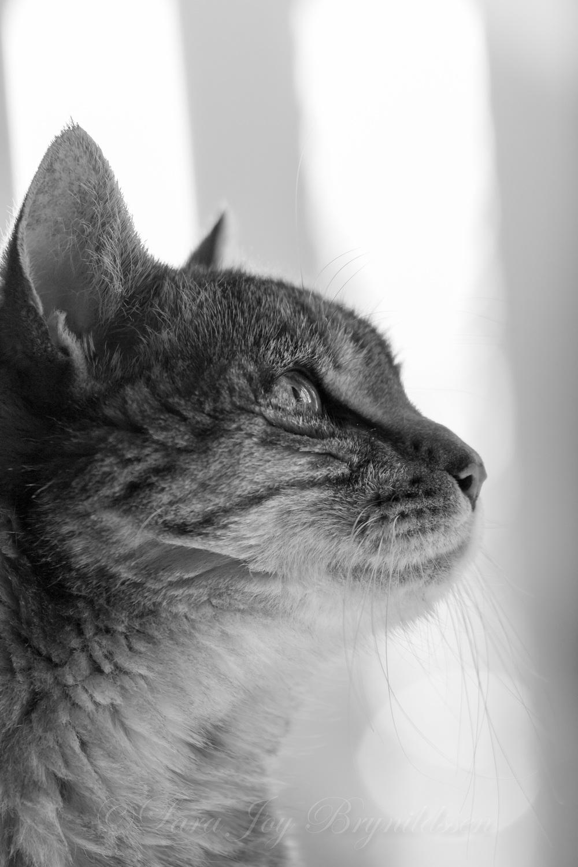 _W5A4534crazy cat people.jpg