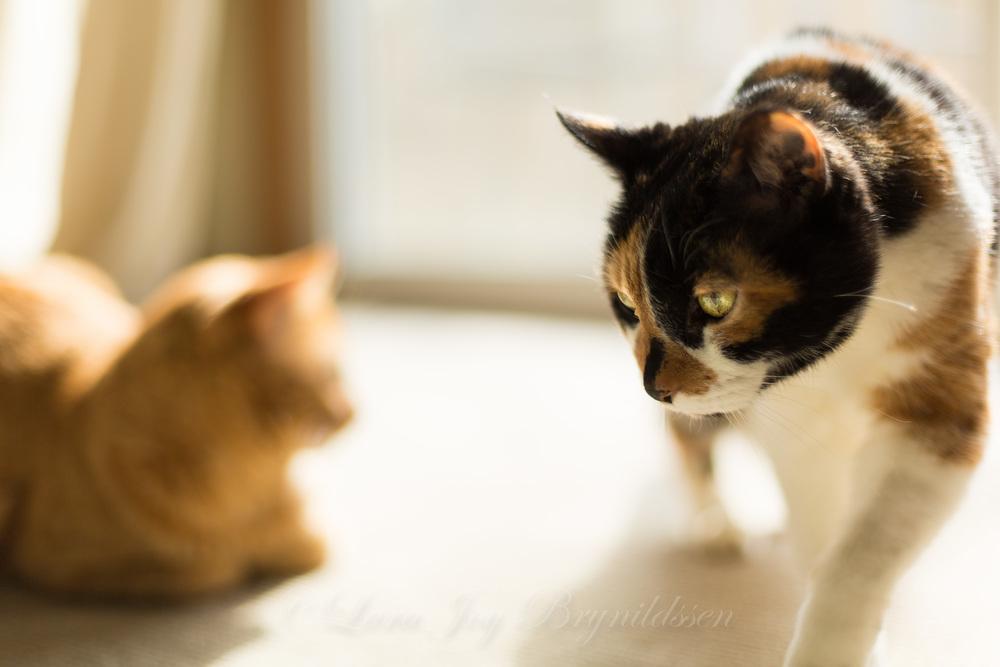 1F8B5193crazy cat people.jpg