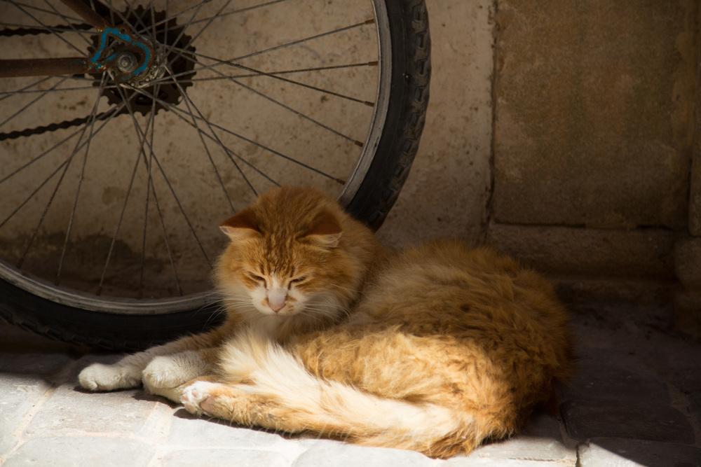 1F8B8271Moroccan Street Cats 2016.jpg