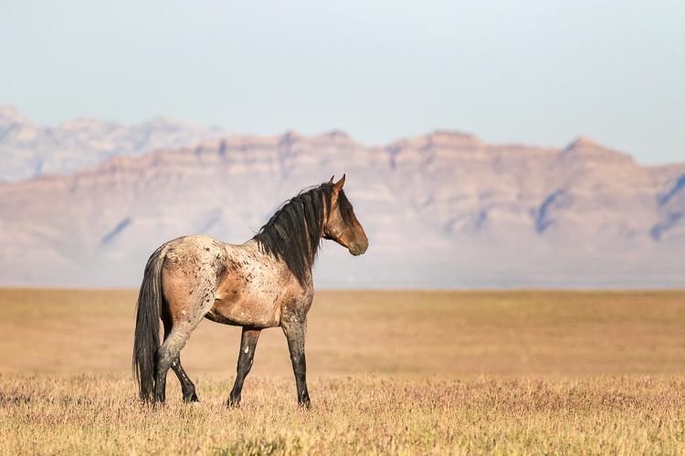 Onaqui-Wild-Horses-11.jpg