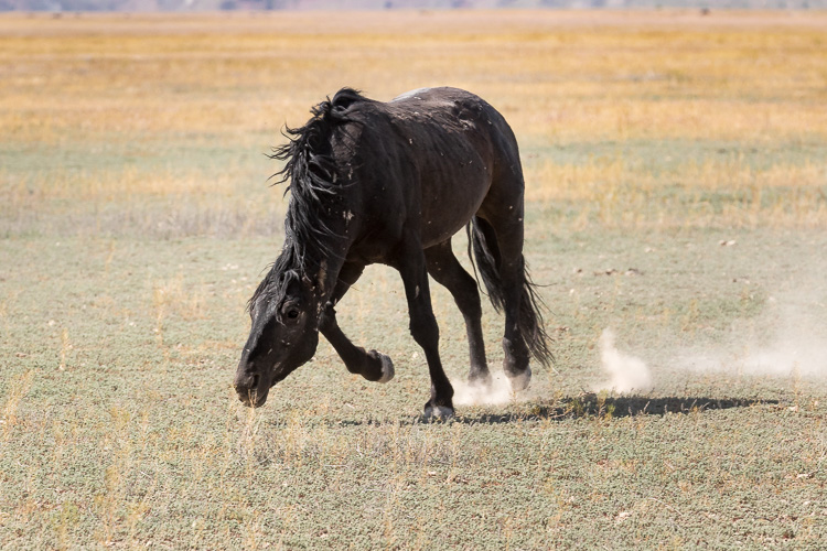 Onaqui-Wild-Horses-32.jpg