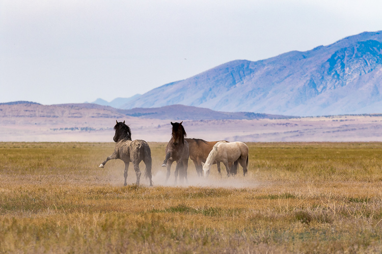 Onaqui-Wild-Horses-38.jpg