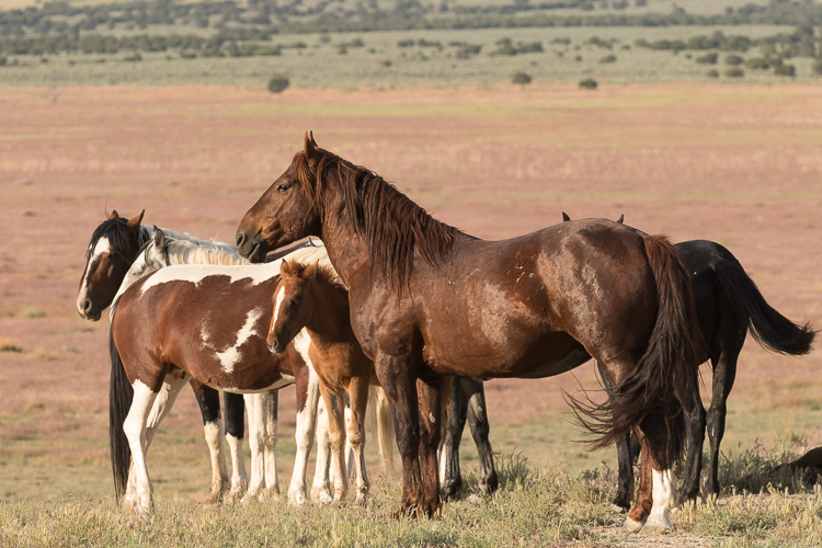 Onaqui-Wild-Horses-45.jpg