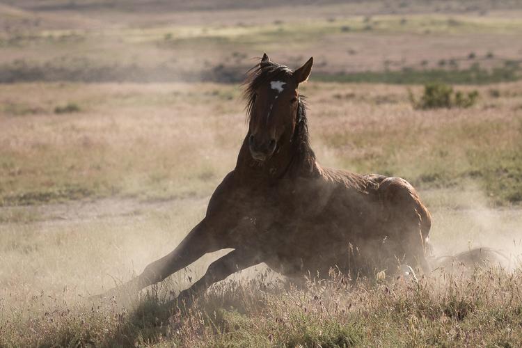Onaqui-Wild-Horses-54.jpg