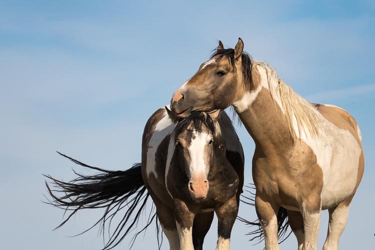 Onaqui-Wild-Horses-57.jpg
