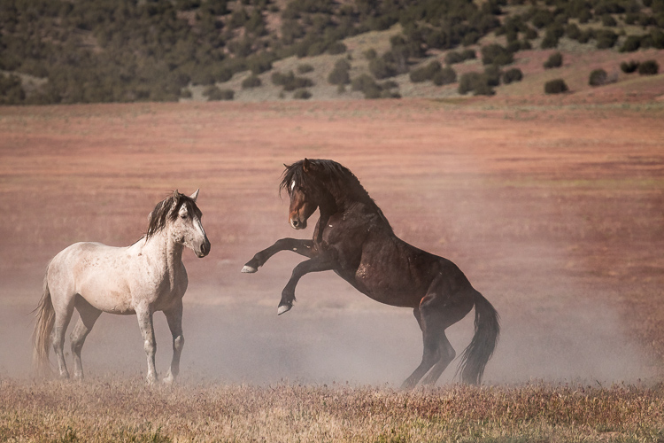 Onaqui-Wild-Horses-66.jpg