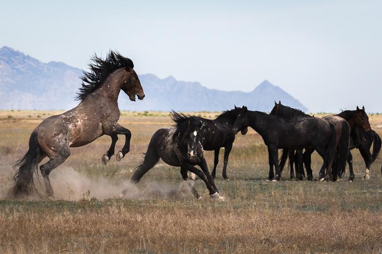 Onaqui-Wild-Horses-76.jpg