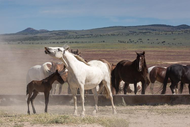 Onaqui-Wild-Horses-91.jpg