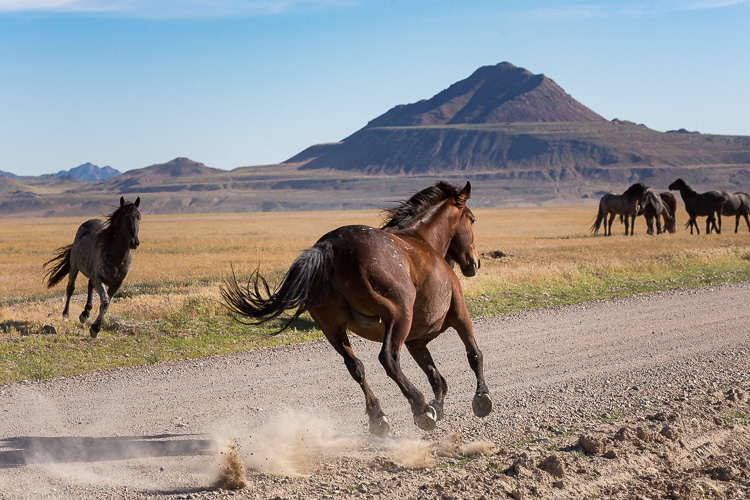 Onaqui-Wild-Horses-132.jpg