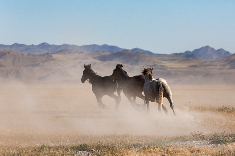 Onaqui-Wild-Horses-156.jpg