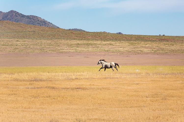 Onaqui-Wild-Horses-163.jpg