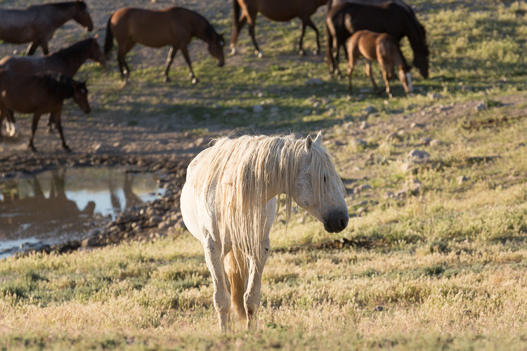 Onaqui-Wild-Horses-171.jpg
