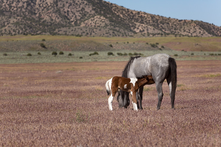 Onaqui-Wild-Horses-186.jpg