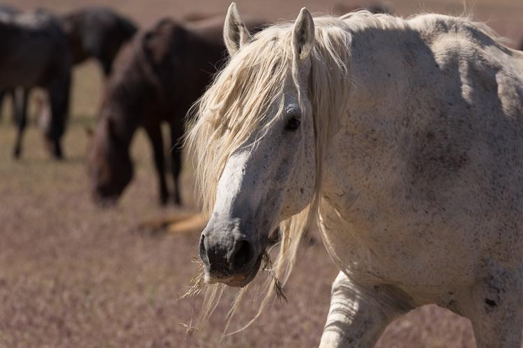 Onaqui-Wild-Horses-189.jpg
