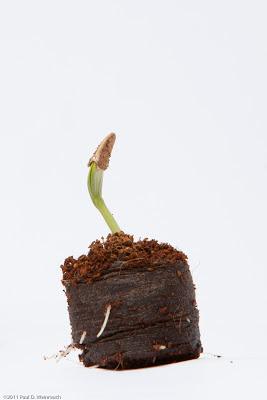 Seeds - ©2012 Paul Weinrauch