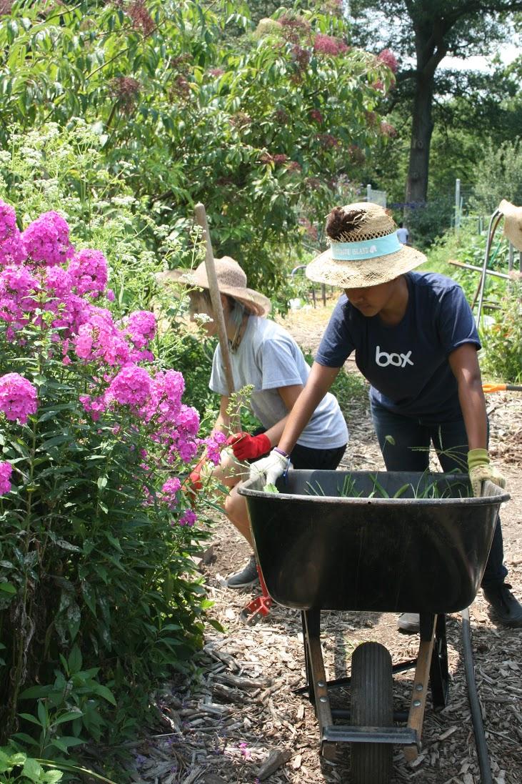 Green Ambassadors Program Washington Youth Garden
