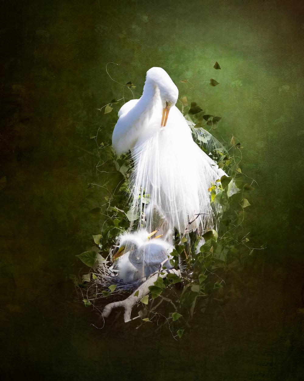 Egret and Babes 2-24.jpg
