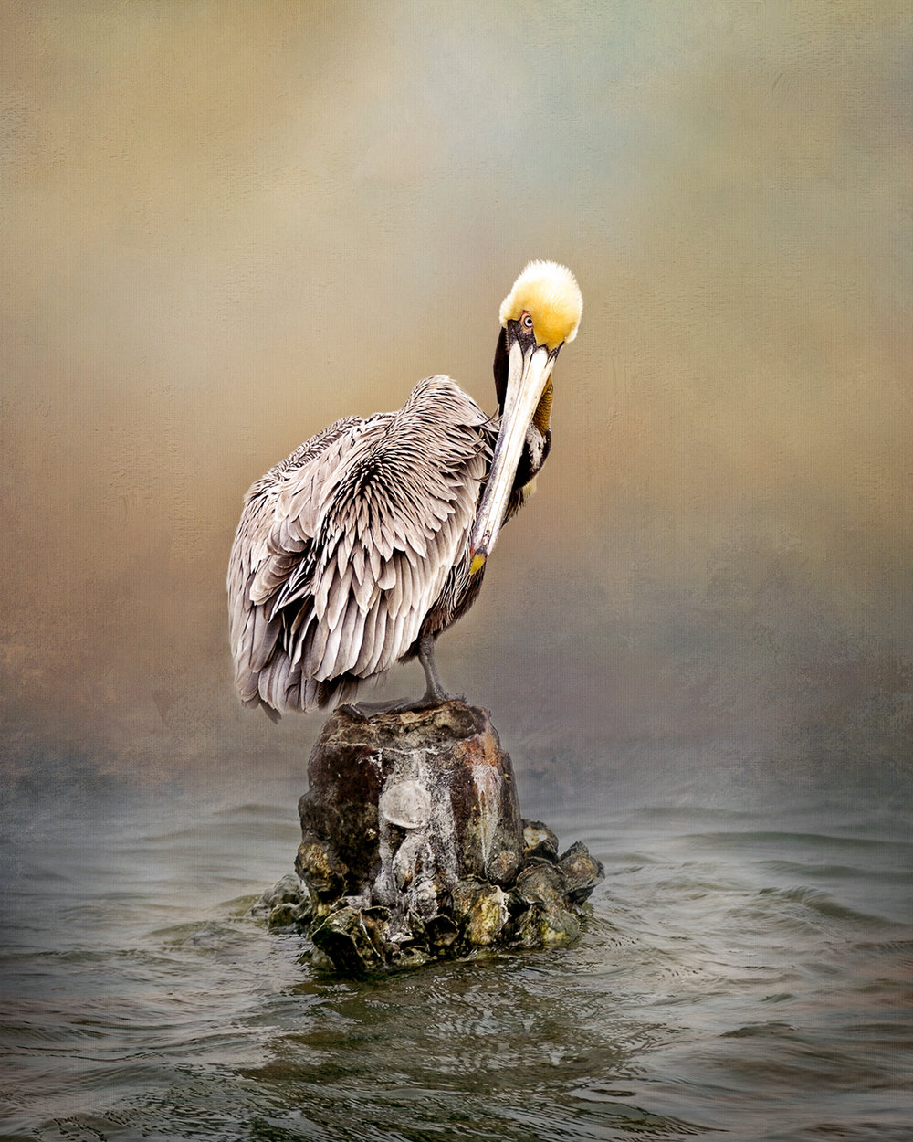 Pelican 7a-26.jpg