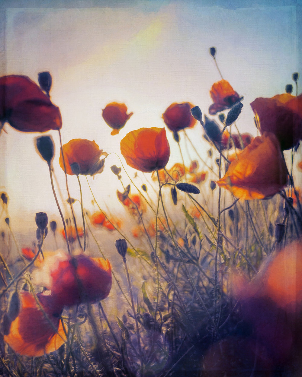 Poppies3-46.jpg
