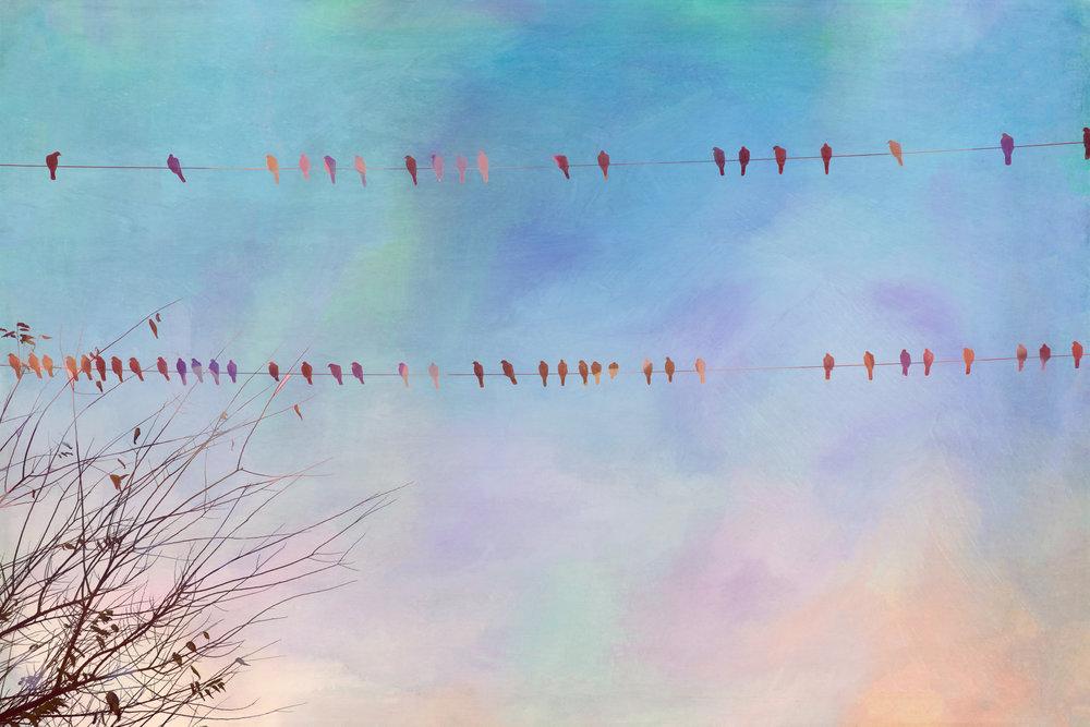 Birds on a Wire-75.jpg