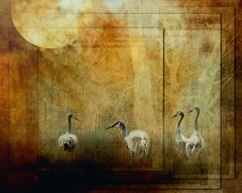 Sandhill Cranes-87.jpg