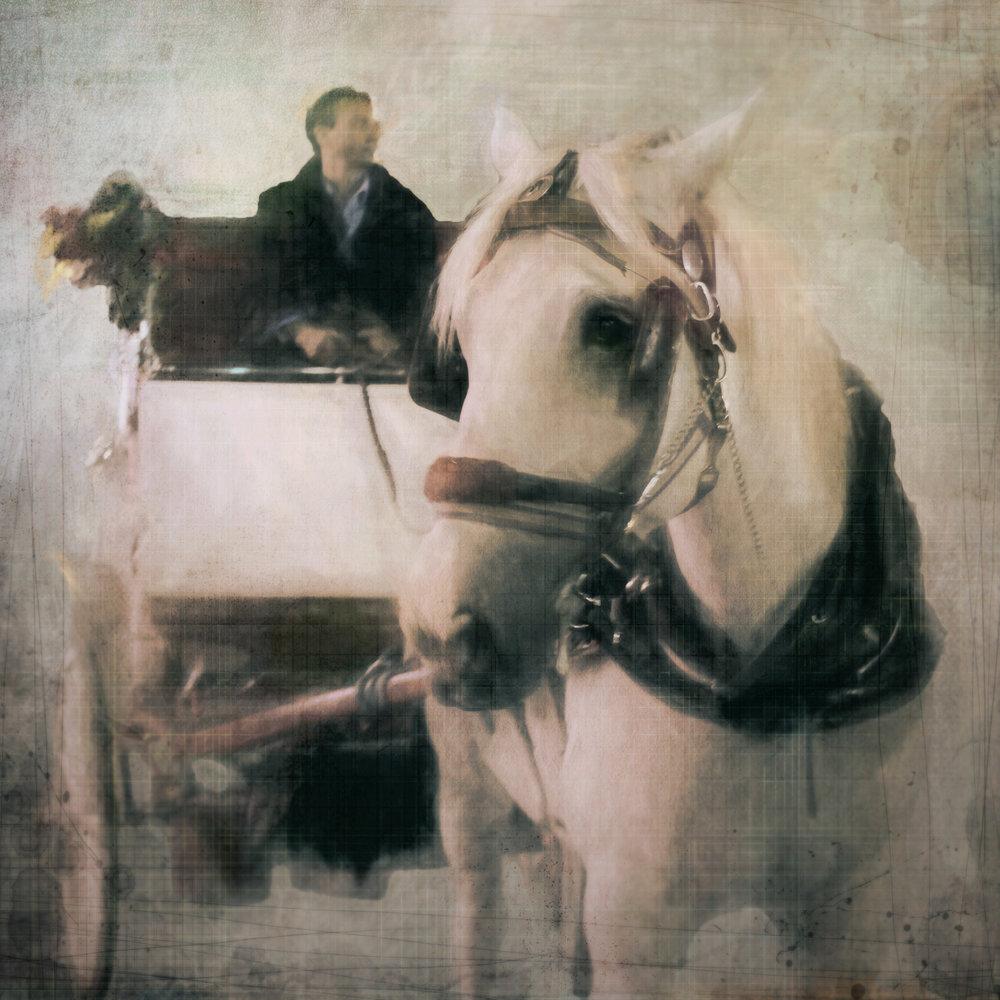 New York Horse-100.jpg