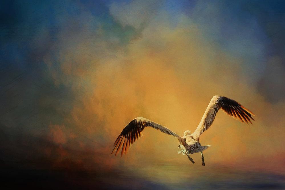 Flying in the Sunset 2-106.jpg