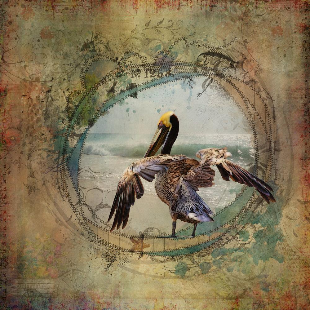 Pelican 2-113.jpg