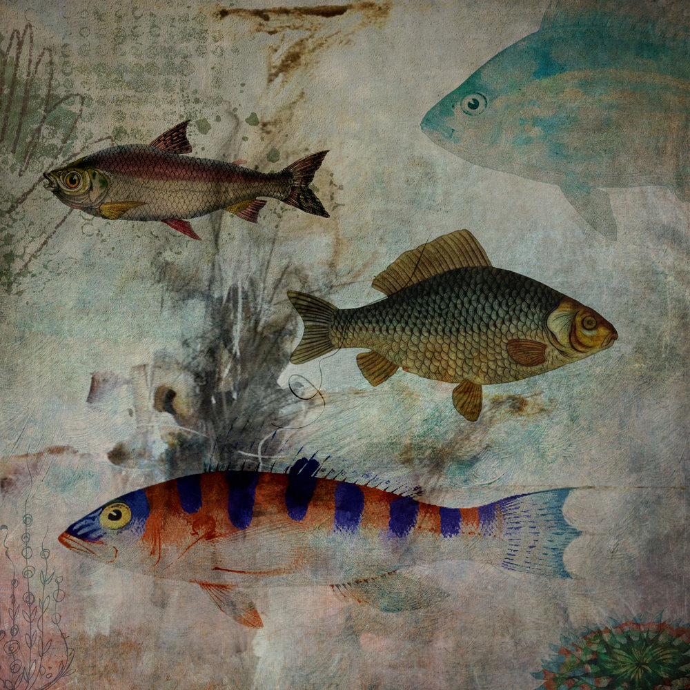 Just Some Fish-132.jpg