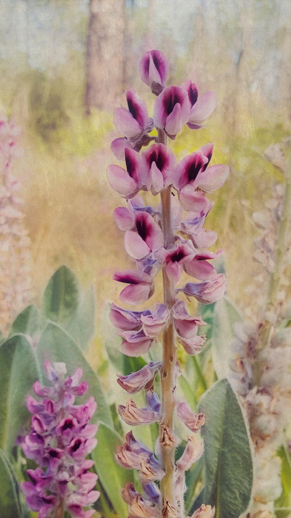 Wild Flower-1-137.jpg